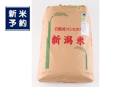 【新米受付】NG4005 村上市産特別栽培米コシヒカリ玄米900kg