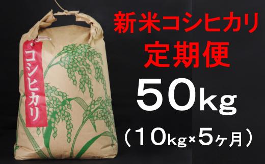 TA032【令和3年産】室戸産新米コシヒカリ10kg【5回定期便】