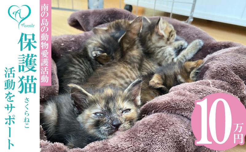 【南の島の動物愛護活動】沖縄アベニールの保護猫(さくらねこ)活動をサポート(10万円)