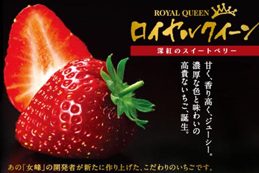 【2609-0155】果肉まで真っ赤な深紅のスイートベリー『58ロハスファームのロイヤルクイーン』2箱