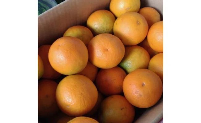 AV6029_頑固果物屋の完熟無袋バレンシヤオレンジ 約7~7.5kg(青秀M~3L)
