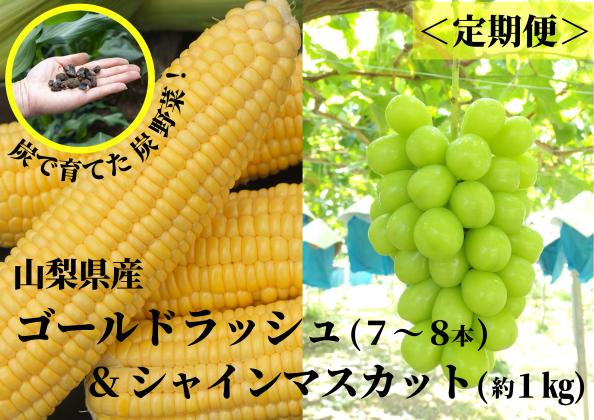 【期間限定 定期便】ゴールドラッシュ 7~8本 & シャインマスカット 1kg 定期便 山梨 農家直送