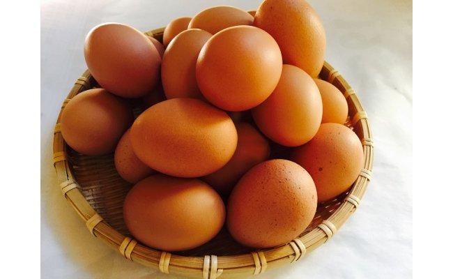 B1807極上ひまわりたまご(40個程度)※破卵補償10個含