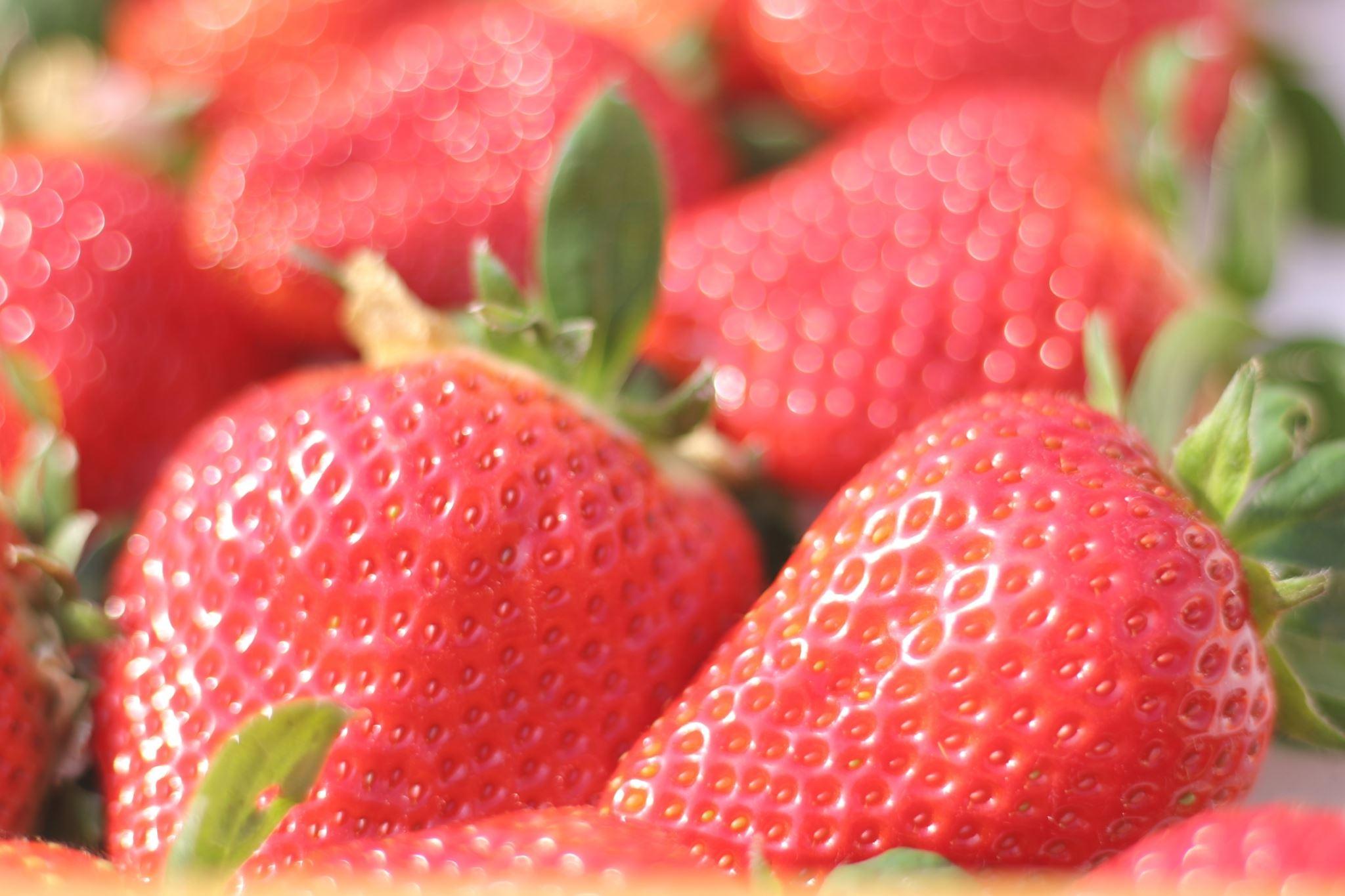 【いちご定期便】(1月2月3月お届け)まるで赤いサファイア!!丹精込めた完熟いちご!! 約450g×3回 H130-007