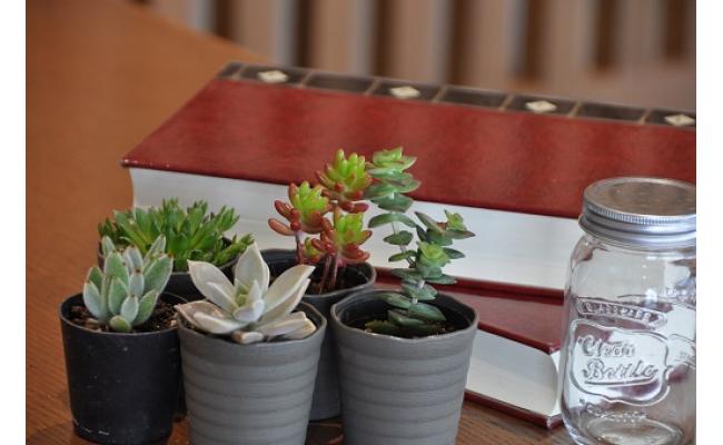 160.おまかせ多肉植物詰め合わせ(20種)