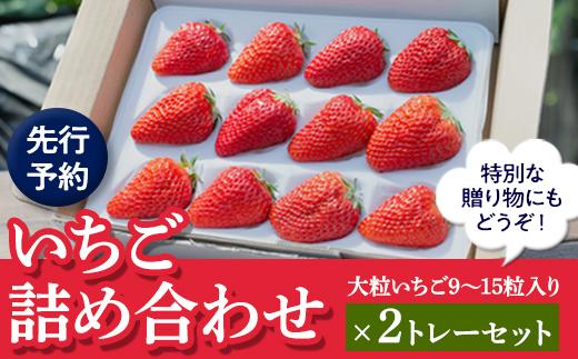 【先行予約】いちご詰合せデラックス(大粒いちご9〜15粒入り)×2トレーセット