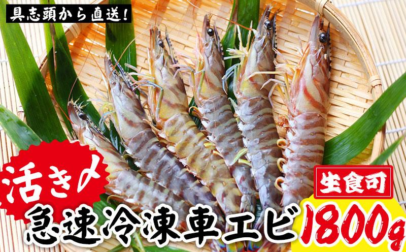 【訳アリ】活き〆急速冷凍車エビ(生食可・約1800g)