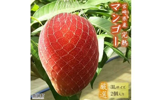 <宮崎県産完熟マンゴー(3L×2個)>2021年6月初旬~9月初旬迄に順次出荷【c594_my_x1】