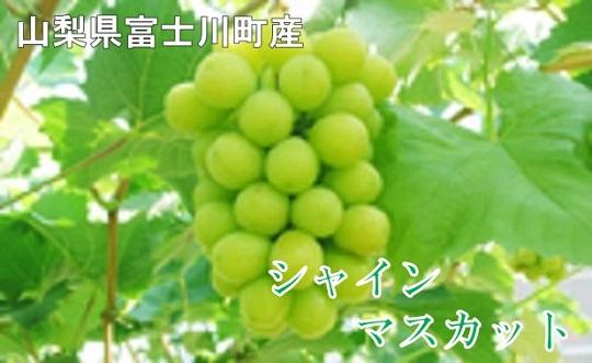 A1512やまなしのぶどう!富士川町産シャインマスカット2房【2021年発送分】