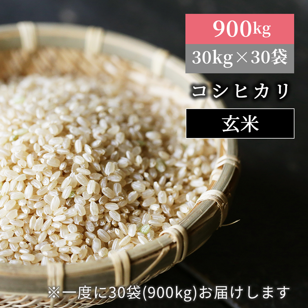 <900kgお届け>W48 あわくら源流米 コシヒカリ玄米30kg×30袋