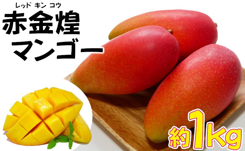 【2021年 発送・家庭用お試し】赤金煌(レッドキンコウ)マンゴー約1kg