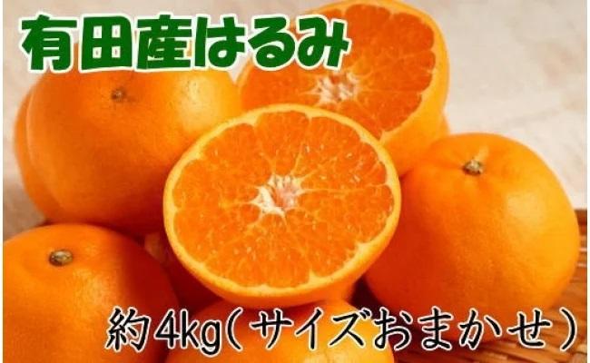 ZD6209_【厳選・濃厚】紀州有田産のはるみ 約4kg(サイズおまかせ)