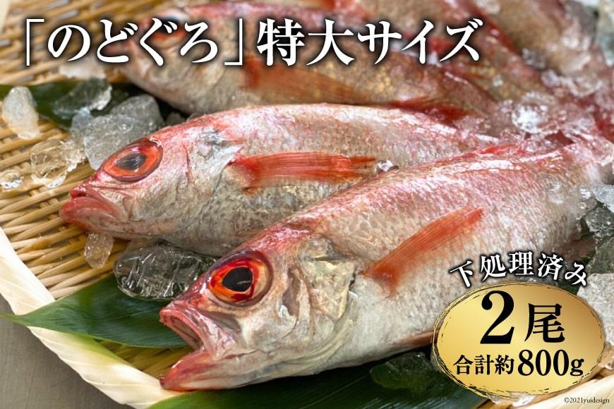 AF089「のどぐろ」特大サイズ(350~450g) 2尾 <煮付け・塩焼き用>