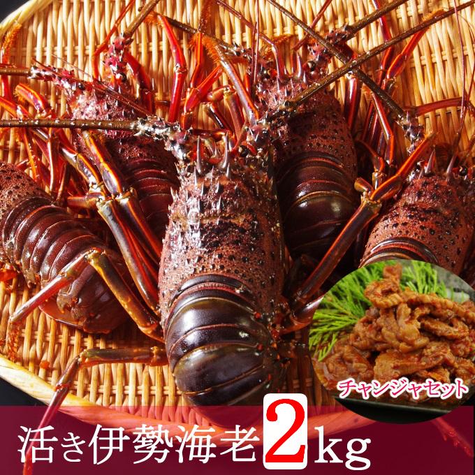 MM011【訳あり】【漁港直送】活き伊勢海老(2kg)&天然まぐろのチャンジャセット