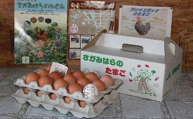 鶏卵 プリマスロックの卵 化粧箱入り30個