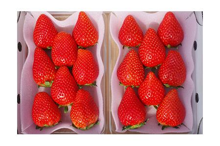 【2609-0068】とろける美味しさ!澳原いちご農園の完熟朝摘みスカイベリー!