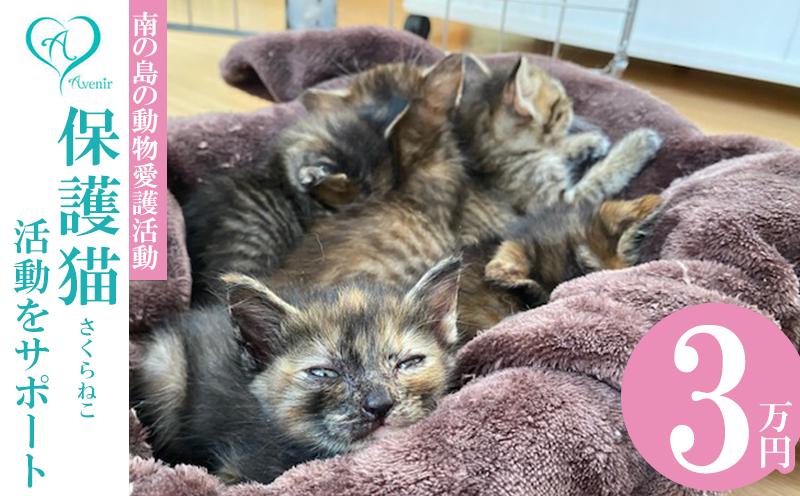 【南の島の動物愛護活動】沖縄アベニールの保護猫(さくらねこ)活動をサポート(3万円)