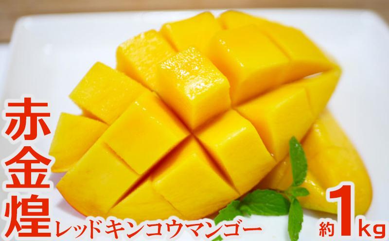 【2021年 発送】赤金煌(レッドキンコウ)マンゴー約1kg