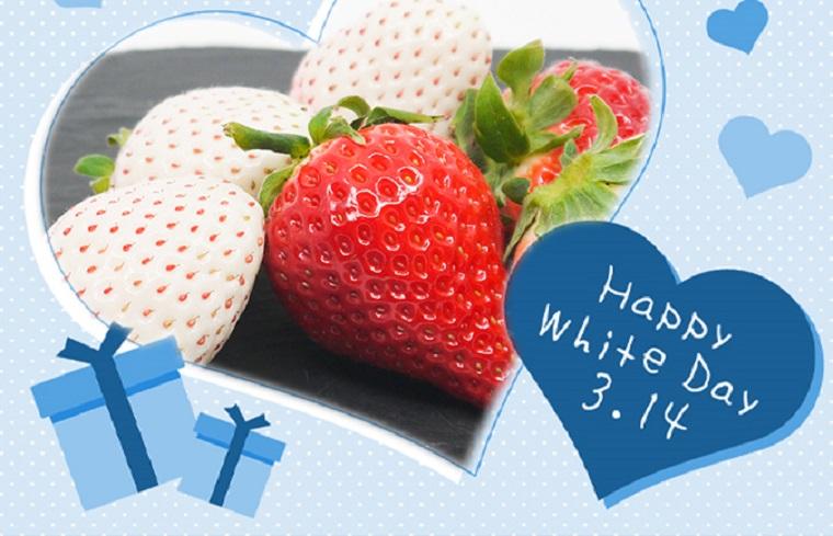FA004_【ホワイトデー企画:3/13指定配送】佐賀県産 パールホワイト&さがほのか(220g~2パック)