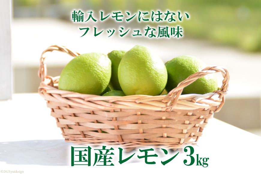 国産レモン 3kg<長崎県農産品流通合同会社>【長崎県南島原市】