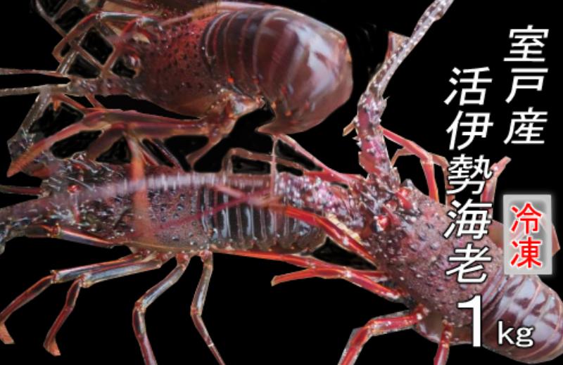 UM045室戸産伊勢エビ1kg(冷凍)