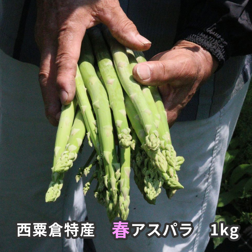 <個数限定>A87西粟倉特産 春アスパラ 1kg