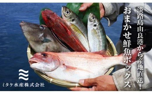 EW01:淡路島由良港から産地直送!おまかせ鮮魚ボックスA