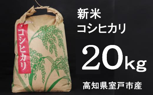 TA029【令和3年産】室戸産新米コシヒカリ20kg