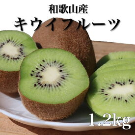 ZE6305_【まごころ手選別】和歌山産 キウイフルーツ 約1.2kg(サイズ混合)