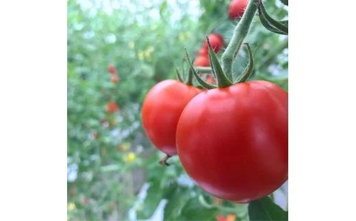 磐梯町産トマト