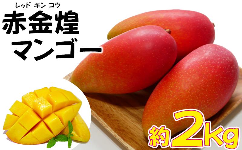 【2021年 発送・家庭用お試し】赤金煌(レッドキンコウ)マンゴー約2kg