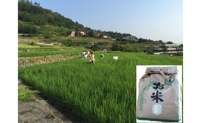 C1603舂米棚田米