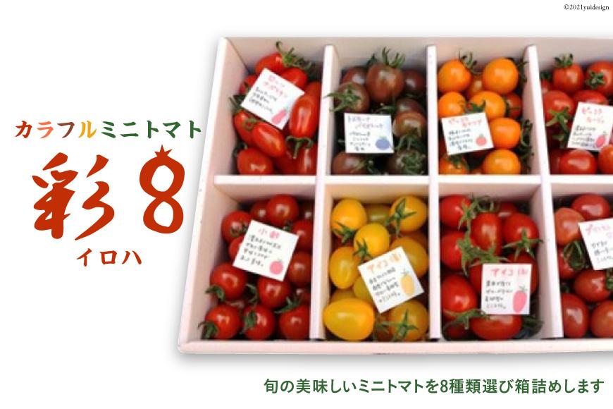 【先行予約】カラフルミニトマト 彩8(いろは)♪<植木農園>【長崎県南島原市】