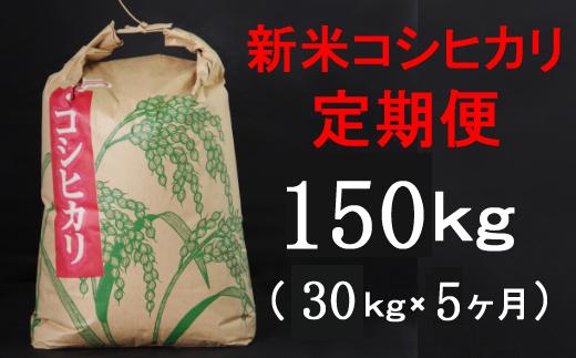 TA038【令和3年産】室戸産新米コシヒカリ30kg【5回定期便】