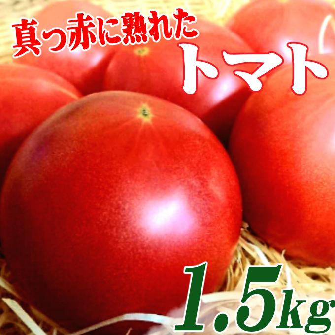 RK085真っ赤に熟れたトマト1.5kg