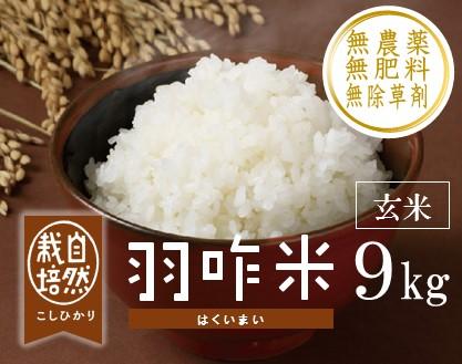 [A021] 【無農薬】【玄米】能登のこだわり自然栽培こしひかり『羽咋米』 9kg(3kg×3袋)