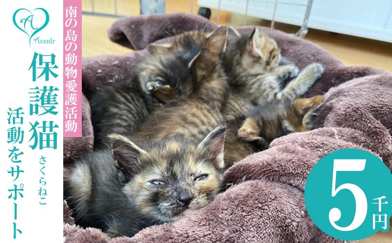【南の島の動物愛護活動】沖縄アベニールの保護猫(さくらねこ)活動をサポート(5千円)