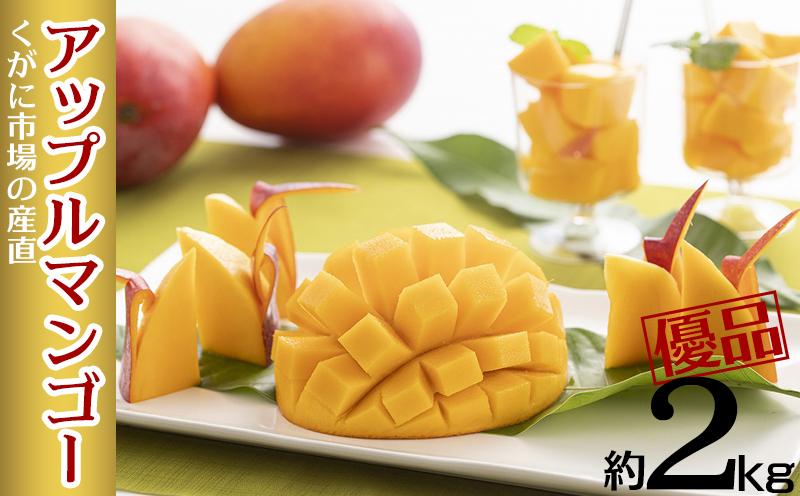 【2021年発送】くがに市場の産直アップルマンゴー約2kg【優品】