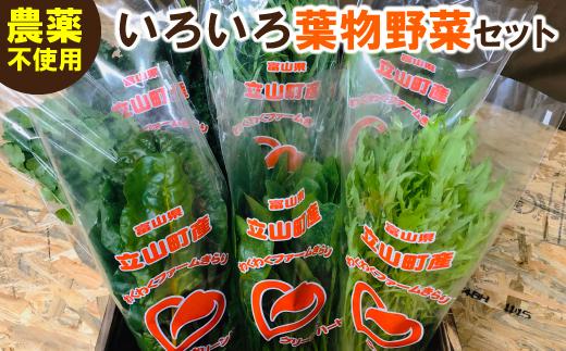 わくわくファームきらりのいろいろ葉物野菜セット