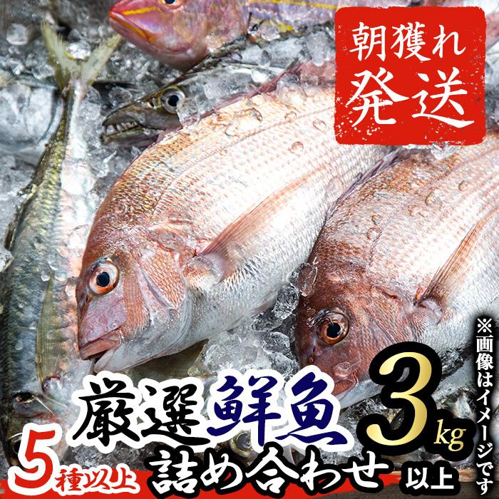 【25411】朝獲れ発送!鹿児島県大隅産の鯛類などの鮮魚詰め合わせBOX(5種類以上3kgから5kg)【江川商店】