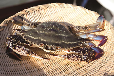 AA061天然の好漁場・肥沃な海の贅沢な恵み 有明海のカニ