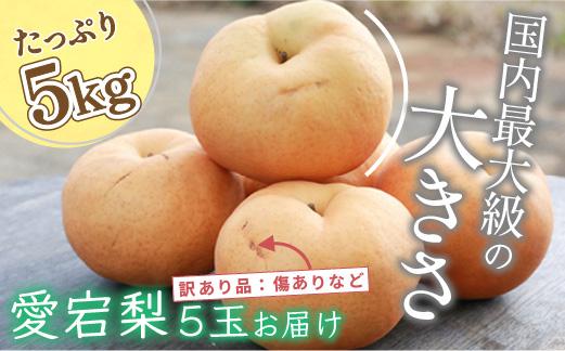 京丹後産大玉梨 愛宕梨5kg (優品)