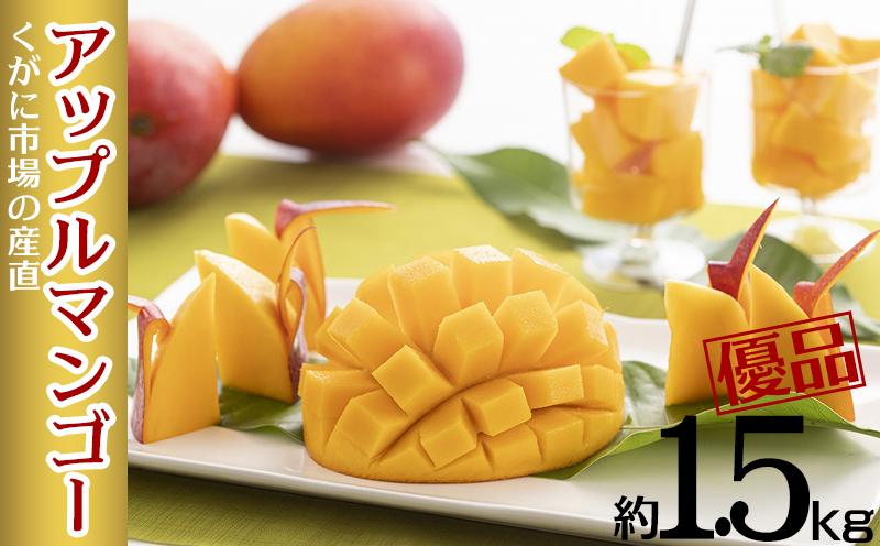 【2021年発送】くがに市場の産直アップルマンゴー約1.5kg【優品】