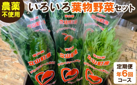 いろいろ葉物野菜セット 定期便(6回コース)
