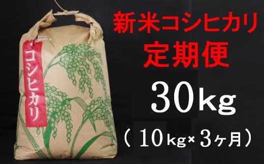 TA031【令和3年産】室戸産新米コシヒカリ10kg【3回定期便】