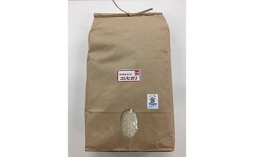 【新米】令和3年産 環境こだわり米「コシヒカリ」白米【10㎏×1袋】【K070SM1】