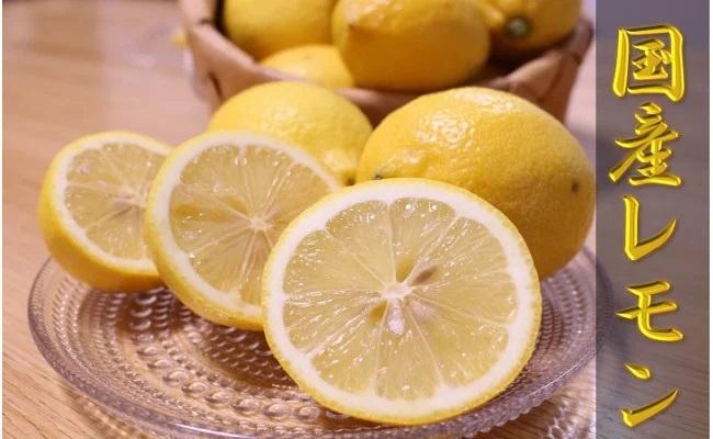 ZN6008_【国産レモン】和歌山県有田産レモン 3kg