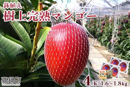 <鉢植え 樹上完熟マンゴー 400~450g×4玉 計1.6kg~1.8kg>2021年5月上旬~6月中旬迄に順次出荷【c628_uz_x1】