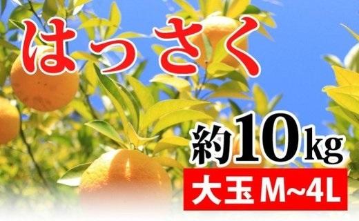 ZA94007_【先行予約】【新鮮果実】はっさく 約10kg(M~4L)