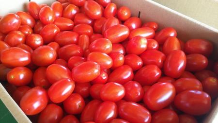 A4112 【期間限定】村上市産 フルーツミニトマト2kg